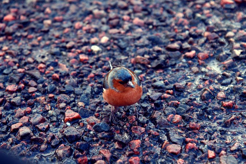 Bird scotland