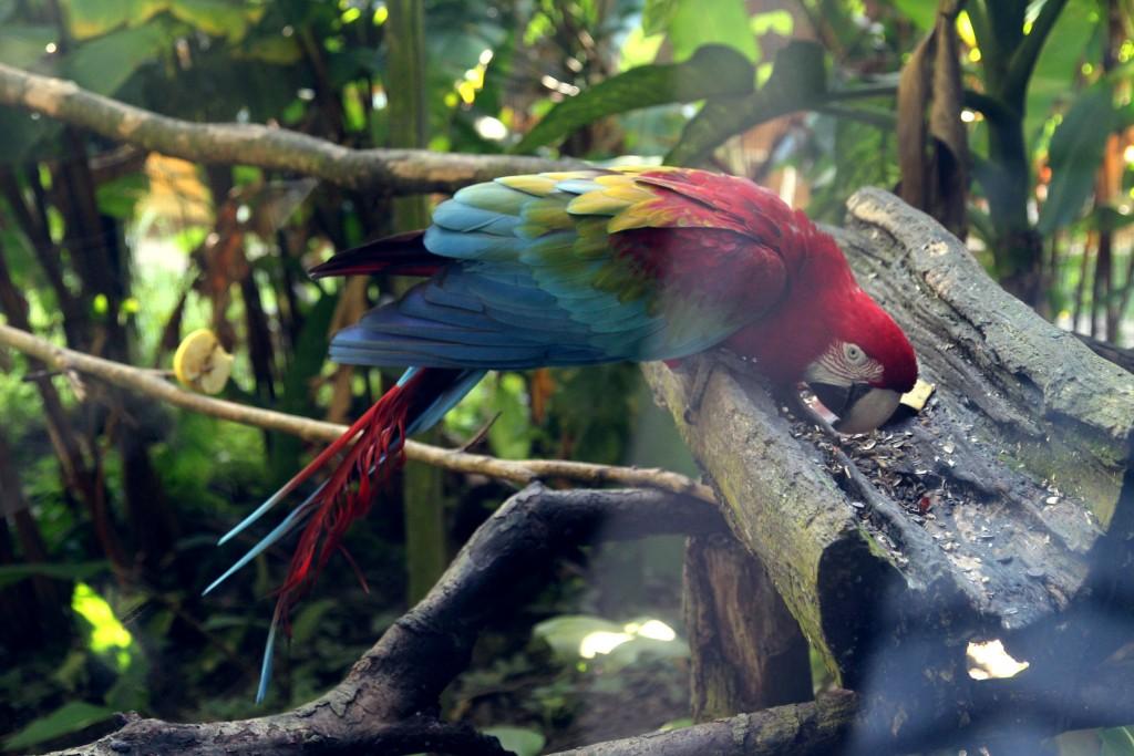 Guadeloupe - RainbowUnicornKitty.com