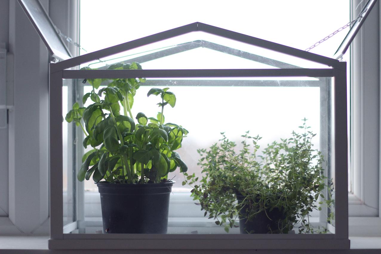 Deco déco plants plantes cuisine kitchen